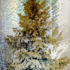 Spruce Frost 2